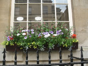 Window Box with Flower