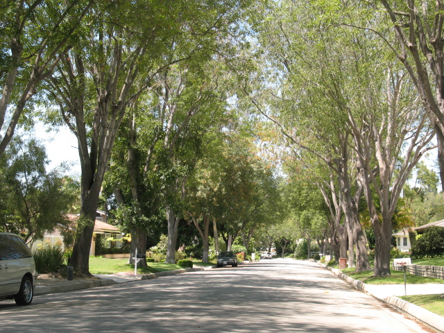Tree lined streets in Rolling Hills Estates