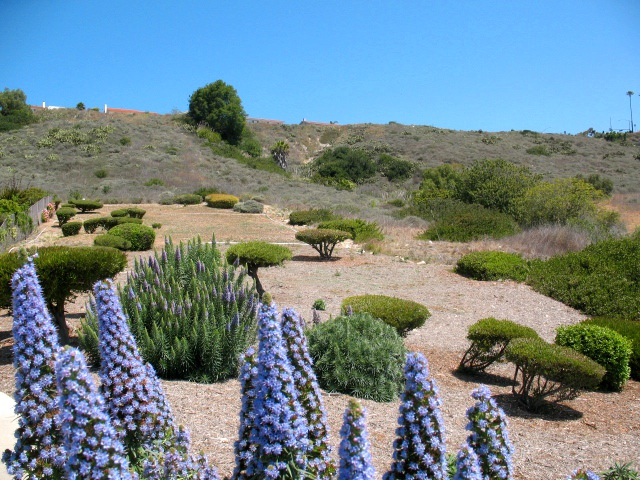 Landscaped hillside in Palos Verdes CA