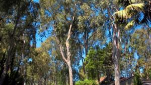 Valmonte Trees