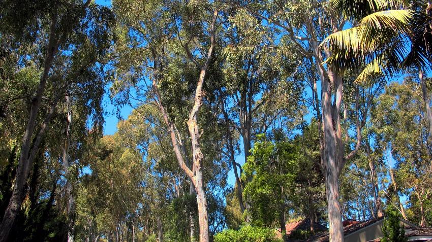 164 Valmonte Trees
