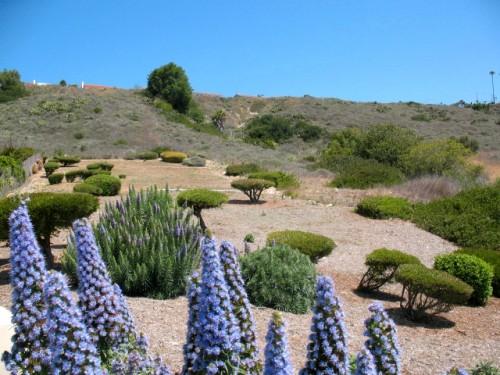 Hillside in Rancho Palos Verdes