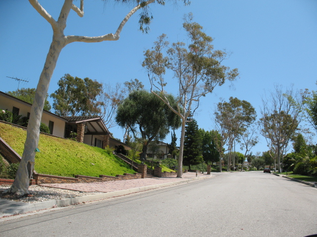 Tree lined streets in Montecillo in Rolling Hills Estates