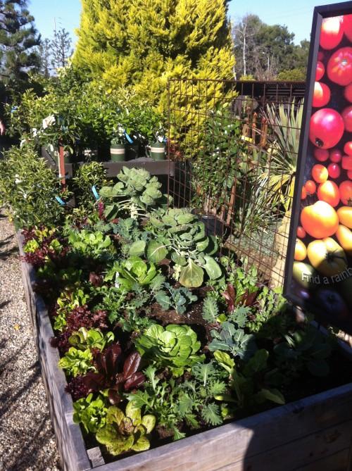 Rogers Gardens - Vegetables