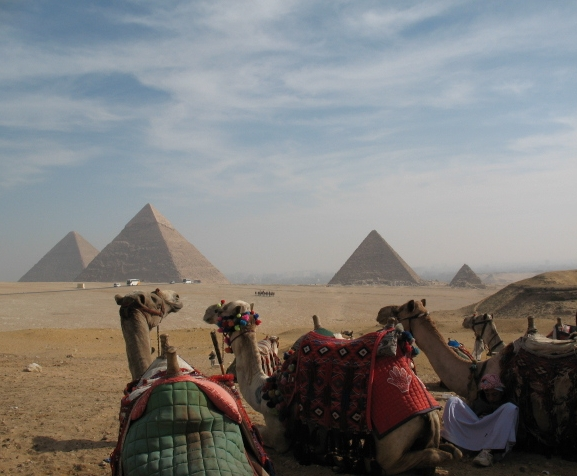 Camels & pyramids 2