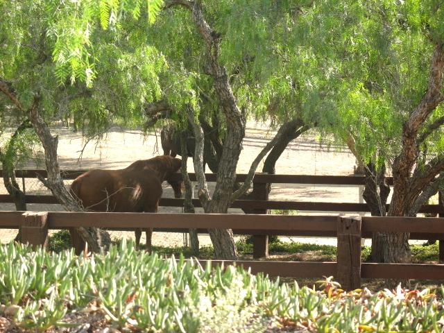 Horses in Rancho Palos Verdes