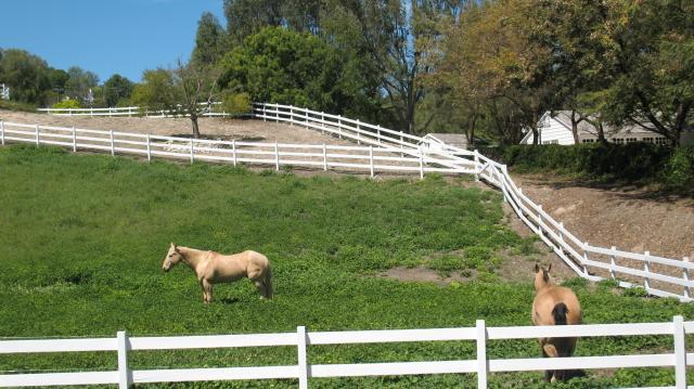 Rolling Hills - Horse Property