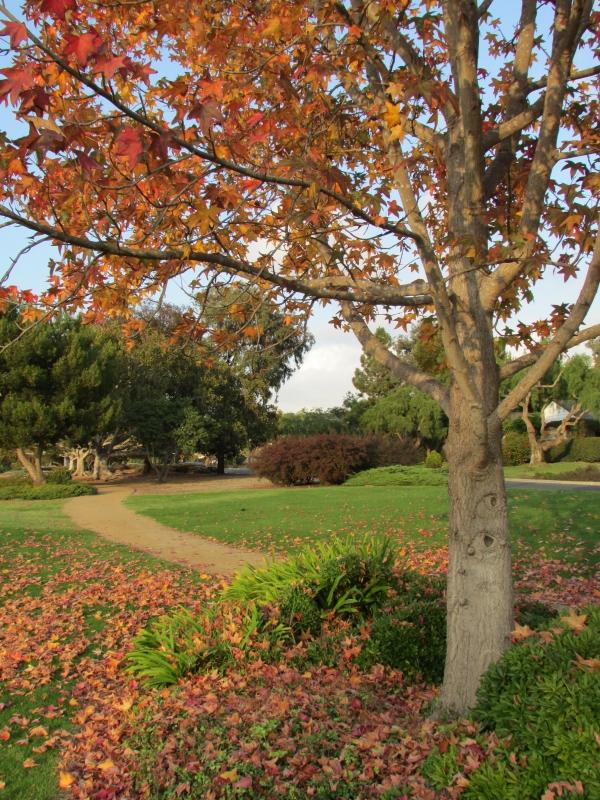 Lunada Bay - Walking path in the fall.