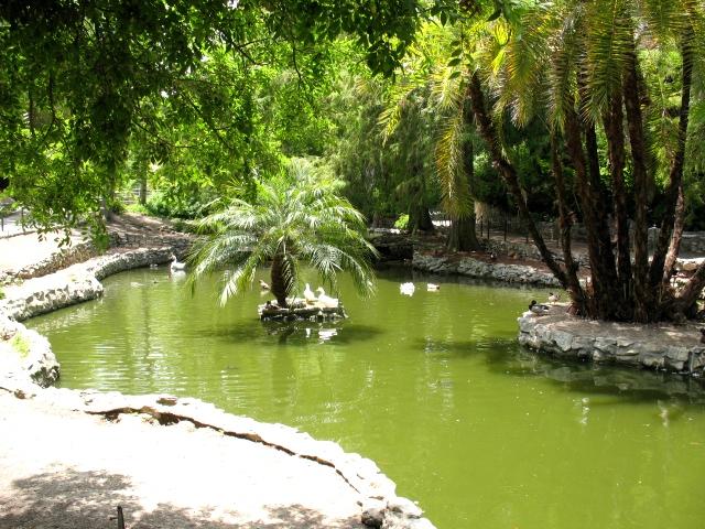 Averill Park San Pedro - Swans and Ducks