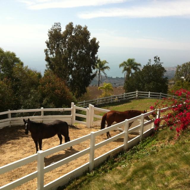 Horses in Rolling Hills CA