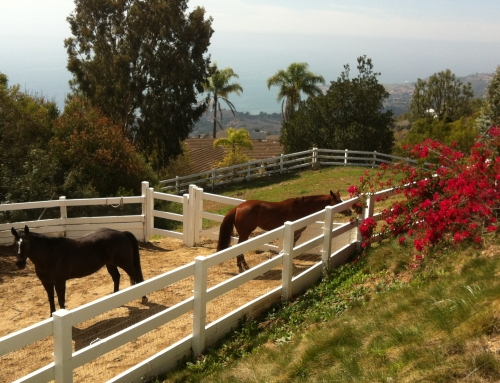 Rolling Hills Horse Property–Best Buys