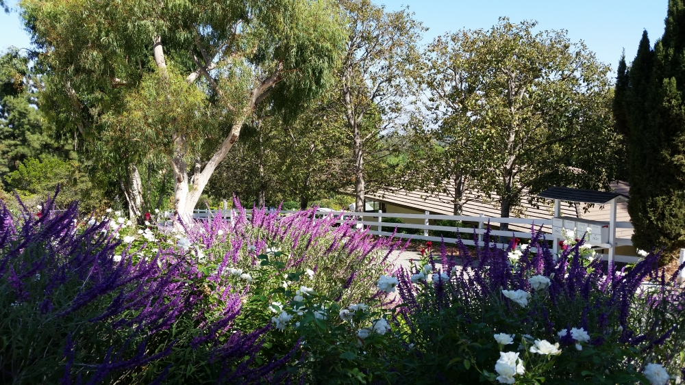 Horse property in Palos Verdes