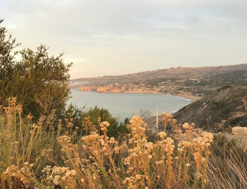 Palos Verdes Single Family Homes Snapshot for November 2018